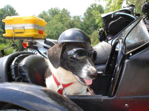 Doggie Bike or Motorcycle Helmet ~ Medium Black